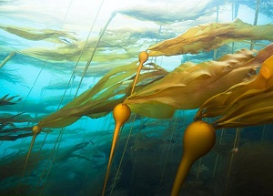 energy-technologies-biomimickry-nature-01-kelp